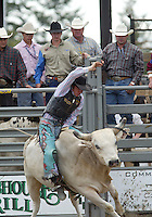 28 August 2005: Wyatt Welsh riding the bull Silver Machine holds on during the Extreme Bulls competition Sunday at the Kitsap County Fair Grounds is slammed into the fence, Welsh scored 90 points in the first round of competition in Bremerton, WA..