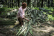 An estate worker seen working at the Kerasaan  palm plantation in Sumatra, Indonesia. Photo: Sanjit Das/Panos