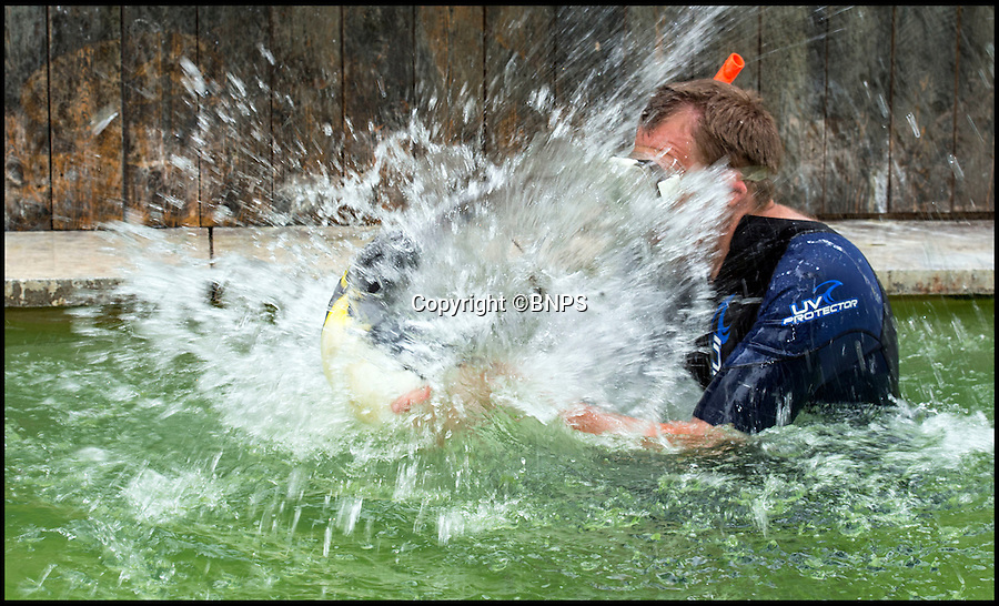 BNPS.co.uk (01202 558833)<br /> Pic: PhilYeomans/BNPS<br /> <br /> P-p-p-please don't make me swim!<br /> <br /> Aquaphobic Charlotte makes more splash than a washing machine before exiting the pool as fast as she can.<br /> <br /> Charlotte the penguin is giving keepers at a bird attraction a headache - because she is p-p-p-petrified of water.<br /> <br /> The young flightless bird is so terrified of getting in to the pool with the rest of her colony that she tries to take off to avoid getting wet.<br /> <br /> The aquaphobic king penguin hatched at Birdland Park & Gardens in Bourton-on-the-Water, Glos, and has been hand-reared by head keeper Alistair Keen.<br /> <br /> Alistair says 'Unfortunately Charlotte doesnt seem to realise that she's a Penguin...and that penguins spend a lot of their time in water, at the moment she doesn't like getting her feathers wet, or even going under'<br /> <br /> It is hoped that following Alistairs lead, Charlotte will slowly become more accustomed to the aquatic side of her life.