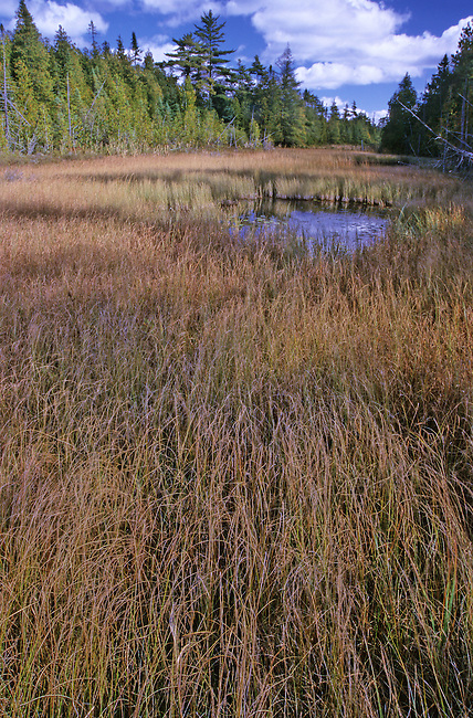 Swale in Fall at the Ridges Sanctuary, Door County, WI