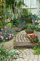 Garden path with raised bed borders of Dianthus, Digitalis, Aquilegia, Paeonia, containers of Antirrhinum, Alyssum, house window, Iris, evergreens, Alchemilla, hosta, pots, mixed plantings
