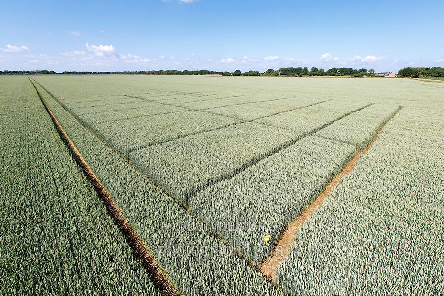 Winter wheat pesticide trials - Lincolnshire, June