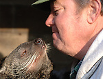 """""""Emily"""" the Binturong nuzzles it's keeper, Brookhaven Highway Dept employee, Peter Glazys at the Harold H. Malkmes Ecology and Wildlife Center at Holtsville Park in Holtsville. Photo by Jim Peppler."""