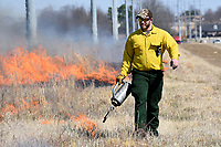 NWA Democrat-Gazette/DAVID GOTTSCHALK  Seth Pickens, Vice President of ECO, Inc., environmental consultant for the city of Fayetteville uses a drip torch Monday, March 18, 2019, during a prescribed burn at the Woolsey Wet Prairie Sanctuary in Fayetteville. The prescribed burn serves as a vegetation management effort to maintain the plant community. Baseline monitoring identified 47 plant species at the site in 2005. At the end of the 2018 growing season, 482 plant species have been observed, 11 of which are species of special concern that are tracked by the Arkansas Natural Heritage Commission.