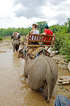 Group Riding Elephants