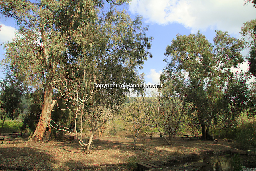 Israel, Upper Galilee, Ein Dardara in the Hula valley