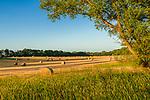 Spolar Farm Fields