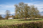 Winter landscape of bare leaved horse chestnut tree, Aesculus hippocastanum, field pasture and detached house, Sutton, Suffolk, England, UK