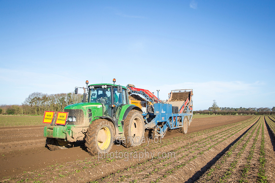 Harvesting parsnips with a Asa Lift TRS parsnip harvester - Norfolk, February