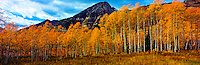 Panoramic View of Mt. Timpanogos seen from Ten Acre Meadow in Autumn Color, Wasatch / Cache National Forest, Wasatch Mountains, Utah
