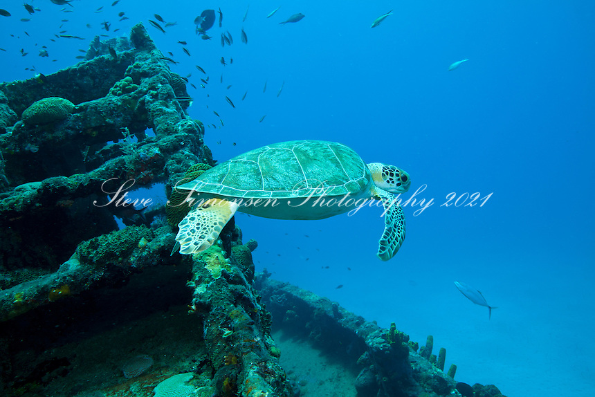 A green sea turtle at the tugboat wreck of the Northwind<br /> Shallow wrecks of Butler Bay, St. Croix <br /> U.S. Virgin Islands