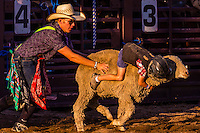 Muttin bustin, Snowmass Rodeo, Snowmass Village (Aspen), Colorado USA.
