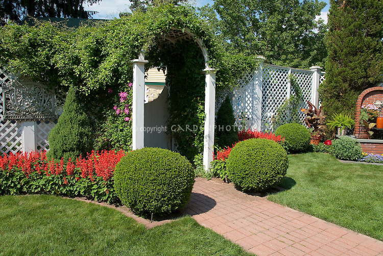 Privacy fenced back yard landscaping with hot salvia red flowers, clipped round shrub boxwood Buxus, water fountain, vines climbing arbor, lawn grass, brick path walkway, container canna and asparagus ferns in pots, sunny summer garden with annual flowers