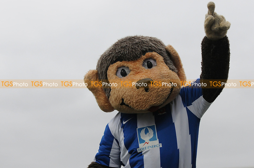 Hartlepool United mascot Angus - Hartlepool United vs Walsall - NPower League One Football at Victoria Park, Hartlepool - 23/03/13 - MANDATORY CREDIT: Steven White/TGSPHOTO - Self billing applies where appropriate - 0845 094 6026 - contact@tgsphoto.co.uk - NO UNPAID USE.