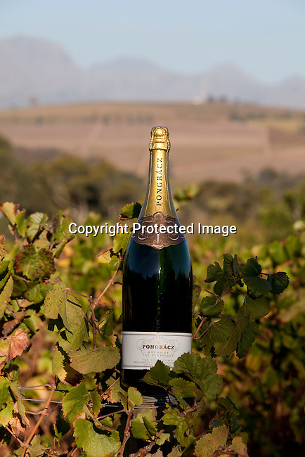 En magnum Pomengracz flaska vid vinrankorna utanfor vingarden i Stellenbosch utanfor Kapstaden, Sydafrika. Foto: Per-Anders Pettersson