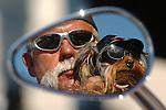 Lee Mullins from O'Brien, Fla., and his dog Dixie are reflected in his Harley Davidson mirror during the Wisconsin state H.O.G. Rally at the Radisson Inn in Ashwaubenon on June 23, 2006.....