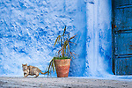 Cat in the medina of Chefchaouen, Morocco.