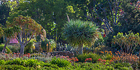 Succulent garden border, Los Angeles Botanic Garden