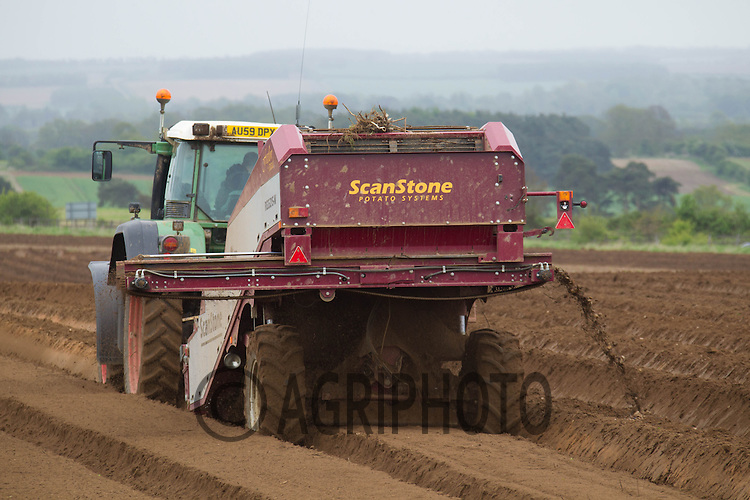 Stone separating before planting potatoes in Norfolk.Picture Tim Scrivener 07850 303986.tim@agriphoto.com.?.covering agriculture in the UK?.