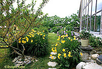 HD06-004x  English Cottage Garden - yellow day lilies, bearded iris - Hemerocallis spp, Iris spp.