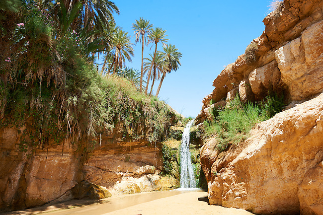 A waterfall amongst the date palms of the Sahara desert oasis of Mides, Tunisia, North Africa