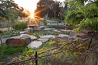 Surise over habitat garden with pond at Los Angeles Natural History Museum