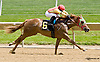 Purim's Gold winning at Delaware Park racetrack on 6/7/14