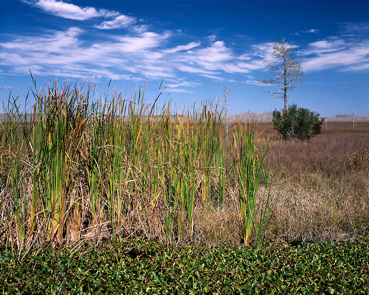 Swampy pond and grassy plains; Big Cypress National Preserve, FL