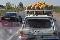 Transportation of melon to the market