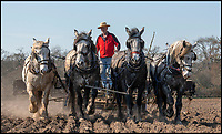 In troubled times life still goes on for tenant farmer Robert Sampson and his heavy horses