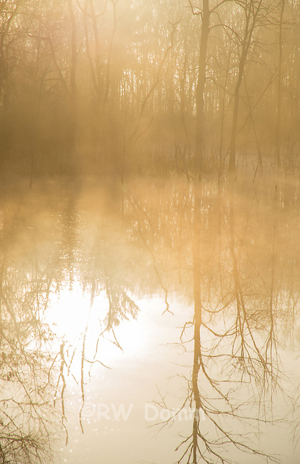 foggy morning pond