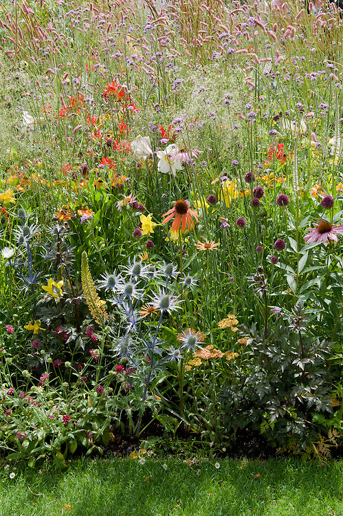 Perennial flower border, early July. Plants include Eryngium, Echinacea, Achillea, Persicaria, and Scabiosa.