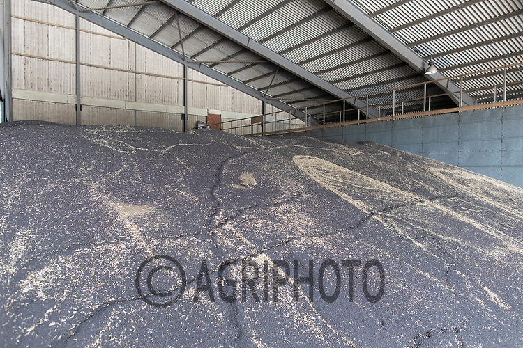 24.7.2020 Oilseed rape in a farm flat floor grain store.  <br /> ©Tim Scrivener Photographer 07850 303986<br />      ....Covering Agriculture In The UK.