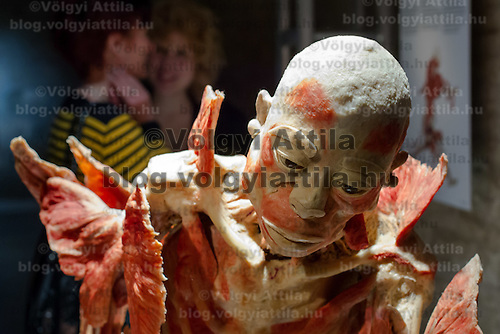 Visitors watch a preserved human body on display at an exhibition in Budapest, Hungary on April 02, 2012. ATTILA VOLGYI