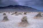 Storm clouds over arrowweed at Devils Cornfield, below Tucki Mountain, Death Valley National Park, California