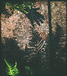 Shadow of a hand with garden ferns