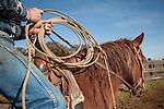 Calf marking and branding the Doug & Loree Joses at the Plasse Ranch near Jackson, Calif.