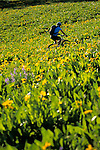 A young woman rides a mountain bike through a field of wildflowers in Jackson Hole, Wyoming.