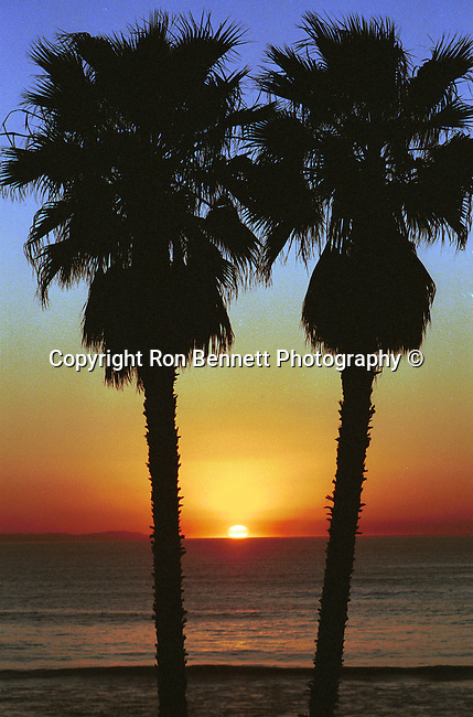 Palm tress at sunset on Pacific Ocean Laguna Beach California,  California Fine Art Photography by Ron Bennett,