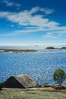 Skär vid havet på Hallskär i Stockholms  ytterskärgård