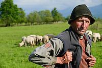 ROMANIA Transylvania, shepherd with grazing goats and sheeps in front of Fagaras mountains  / RUMAENIEN Transsilvanien Siebenbuergen, Arpasu de Sus, grasende Ziegen und Schafe auf Weide vor Fagaras Gebirge