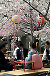 April 10, 2012, Kyoto, Japan - A traditional Geisha with another men eat and drink under the cherry trees near the Chion-in temple. Hanami is one of the oldest traditions in Japan, which is to admire the cherry blossoms. Last year this tradition was interrupted in the northeast of Japan, because of the big earthquake and tsunami of March 11, 2011.