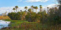 Wetlands scenery near Orlando shortly after sunrise