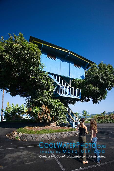 Toutists observing a large tree house on tropical mongo tree, Ke`ei, Big Island, Hawaii