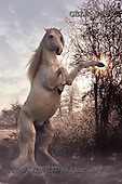 Bob, ANIMALS, REALISTISCHE TIERE, ANIMALES REALISTICOS, collage, horses, photos+++++,GBLA3556,#a#