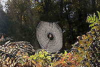 Spiders Web on Autumn Morning