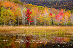 Autumn color in Acadia National Park, Maine, USA
