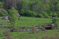 Farm scene with barn and shed and split rail fence in rural West Virginia