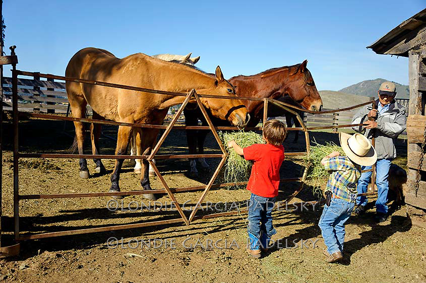 Country kids helping grandpa feed the horses, San Luis Obispo, California
