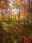 Autumn, Great Meadow, Sieur de Mont, Acadia NP, Maine